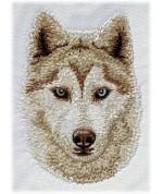 Sibiřský husky 1