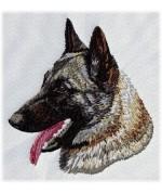 Belgian Shepherd 1